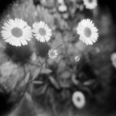 Holga 120 CFN with macro filter and Lomography Earl Grey 100 film.