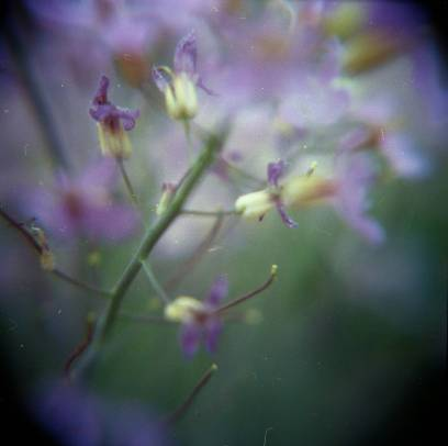 Holga 120 CFN with macro filter and Lomography CN 400 film.