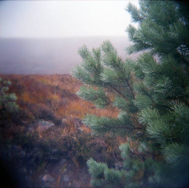 Schotland in the rain. Holga 120 CFN and Kodak Portra VC 400 film.